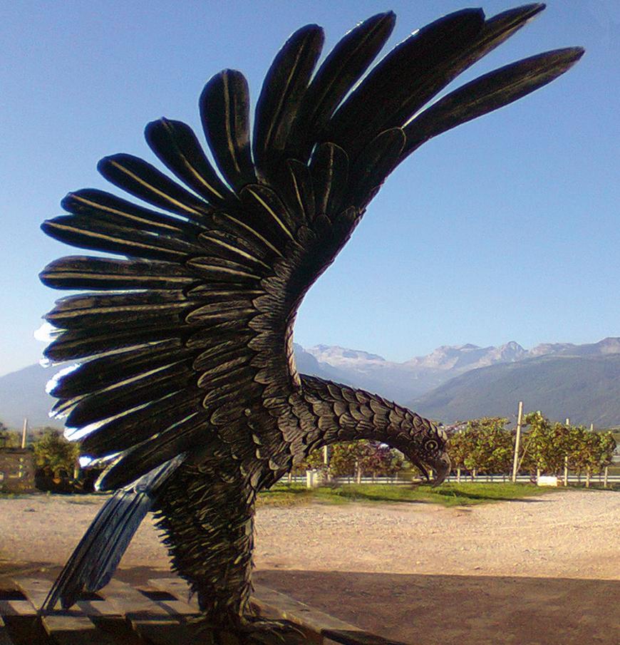 870x905 eagle01